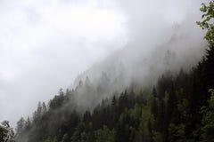 Mgłowe chmury wzrasta od wysokogórskiego halnego lasu Zdjęcia Royalty Free
