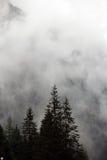 Mgłowe chmury wzrasta od wysokogórskiego halnego lasu Fotografia Royalty Free
