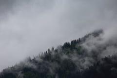 Mgłowe chmury wzrasta od wysokogórskiego halnego lasu Zdjęcie Stock