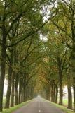 mgłowe drogi Obraz Royalty Free