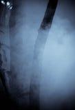 mgłowi drzewa Zdjęcie Stock