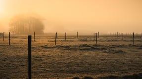 Mgłowi pola Obrazy Royalty Free