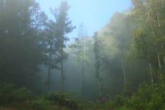 mgłowy Zdjęcie Royalty Free
