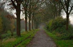 Mgłowy allea zdjęcie royalty free