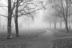 mgłowy footpath Zdjęcie Stock