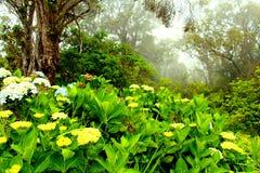 Mgłowy forrest na Kauai Zdjęcia Royalty Free