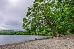 Mgłowy i zielony Gromadzki jezioro, Zjednoczone Królestwo Obraz Stock