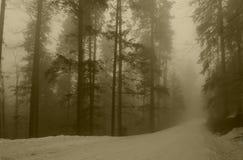 mgłowy las Obrazy Royalty Free