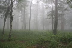 Mgłowy las fotografia royalty free