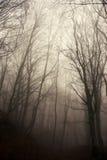Mgłowy las Zdjęcia Stock