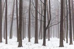 Mgłowy las w zimie Zdjęcie Royalty Free