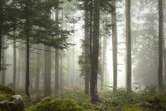 Mgłowy lasowego drzewa krajobraz Obrazy Royalty Free