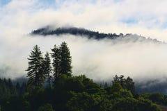Mgłowy lasu krajobraz Zdjęcia Royalty Free