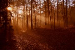 Mgłowy ranek zdjęcie royalty free