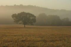 mgłowy ranek Zdjęcie Stock