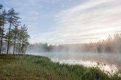 Mgłowy ranek przy lasowym stawem Zdjęcia Royalty Free