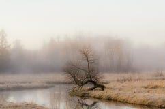 Mgłowy ranek w kraju Zdjęcie Royalty Free
