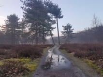Mgłowy ranek w polach Obrazy Stock