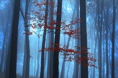 Mgłowy tajemniczy las podczas spadku Fotografia Royalty Free