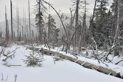 Mgłowy zima krajobraz. Zdjęcia Stock
