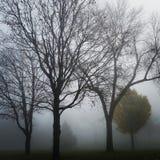 mgła park Obraz Stock