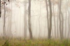 Mgła przez drzew Zdjęcia Stock