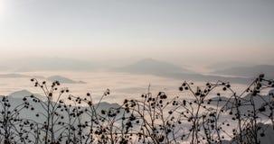 Mgła przy Phu Chi Fa, Tajlandia Zdjęcia Royalty Free