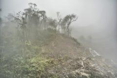 Mgła przy ranku lasem w lecie Zdjęcia Royalty Free