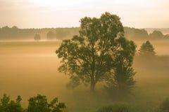 mgła ranek Zdjęcia Stock