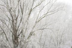 mgła ranek Obraz Royalty Free