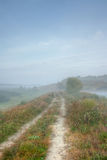 mgła ranek Zdjęcie Stock