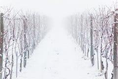 mgła snowed winnicy Obraz Stock