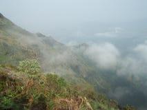 Mgła Valey Obrazy Stock