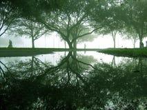 mgła vinoy Fotografia Royalty Free