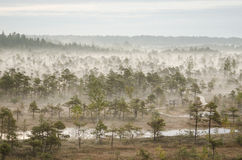 Mgła w bagnie Kemeri Zdjęcie Stock