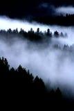 Mgła W Drzewach Fotografia Stock