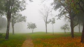 Mgła w lesie Zdjęcia Stock