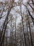 Mgła w lesie w jesieni obraz stock