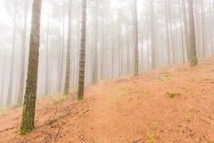 Mgła w plantaci Zdjęcia Stock