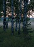 mgły 3 las zdjęcia royalty free