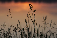 mgły domu krajobrazu ranek sylwetki drzewa Zdjęcia Stock