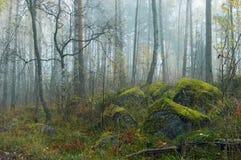 mgły drewno Obrazy Stock
