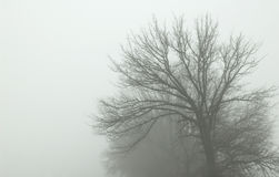 mgły droga Zdjęcie Stock