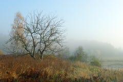 mgły drzewo Obraz Royalty Free