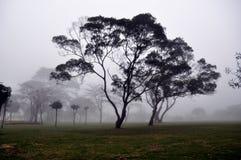 mgły drzewo Zdjęcia Stock