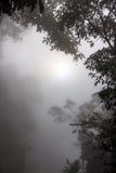 Mgły i cienia Drewniany Lasowy park narodowy Zdjęcie Royalty Free