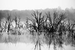mgły jeziora ranek Fotografia Stock