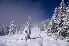 mgły lasu zima obrazy stock