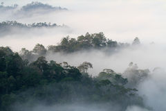 Mgły morze w wzgórzu Zdjęcie Stock