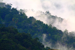 mgły równa dolina Obraz Royalty Free